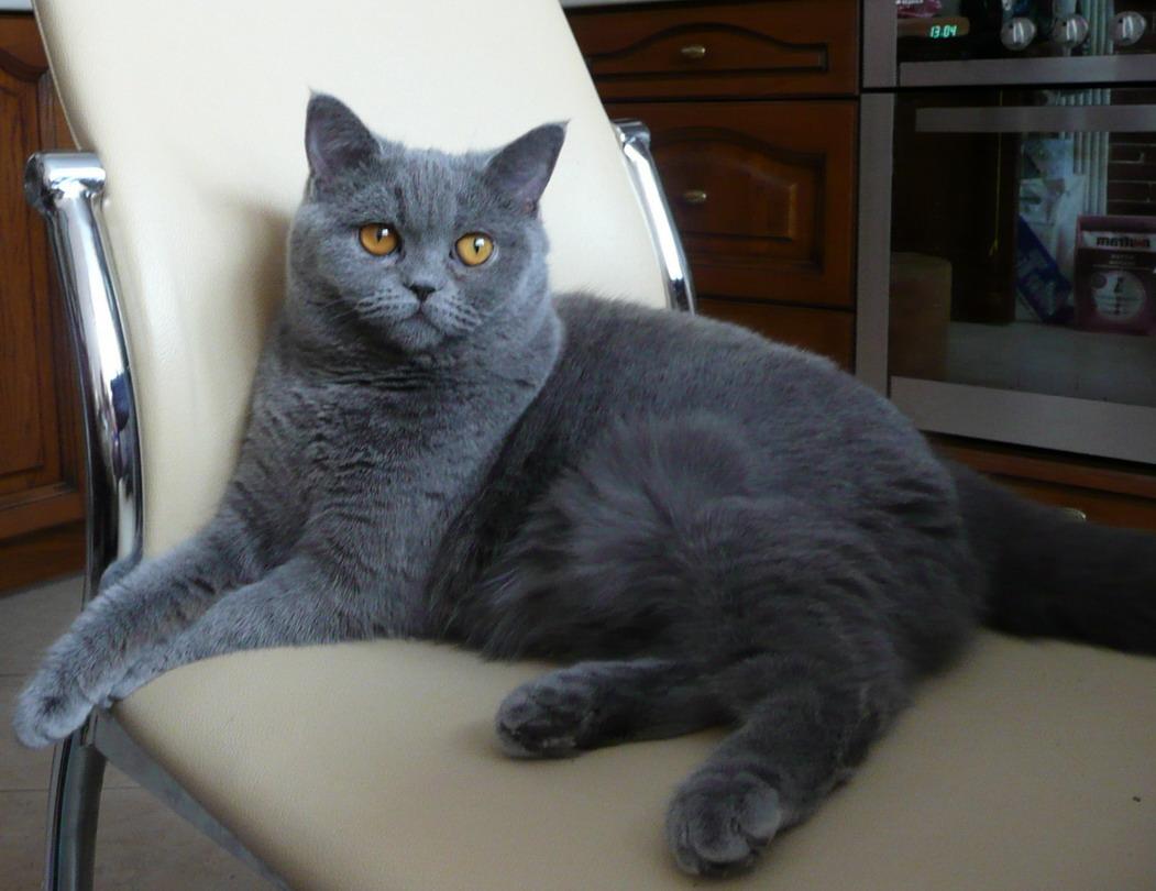 http://br-cats.narod.ru/P1000086_Ks.jpg